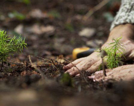 Image programmation Ciné-rencontre L'intelligence des arbres