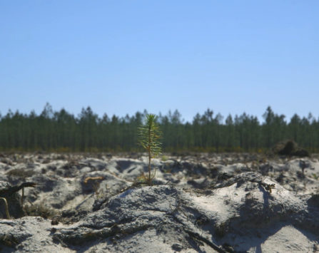 Image programmation Ciné-débat Le Temps des Forêts