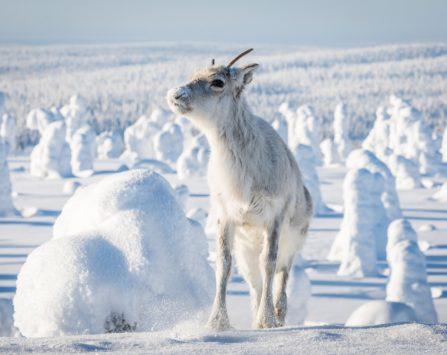 Image programmation Ciné-Quiz Aïlo : une odyssée en Laponie