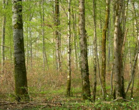 Image programmation Quelle forêt pour demain ?