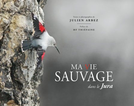 Image programmation Julien Arbez